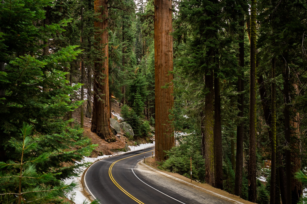 King Canyon and Sequoia National Park | California Highlights