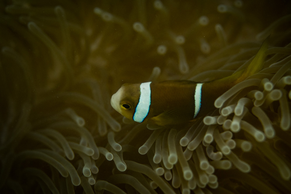 Diving and Snorkelling on Raiatea, French Polynesia