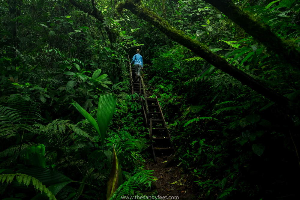 Hiking in Nicaragua: Discovering The Cloud Forests Of Peñas Blancas   Nicaragua