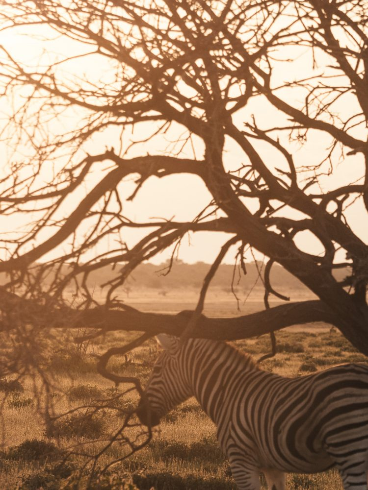 A Taste Of Namibia: Our 11-Day Namibia Roadtrip Itinerary