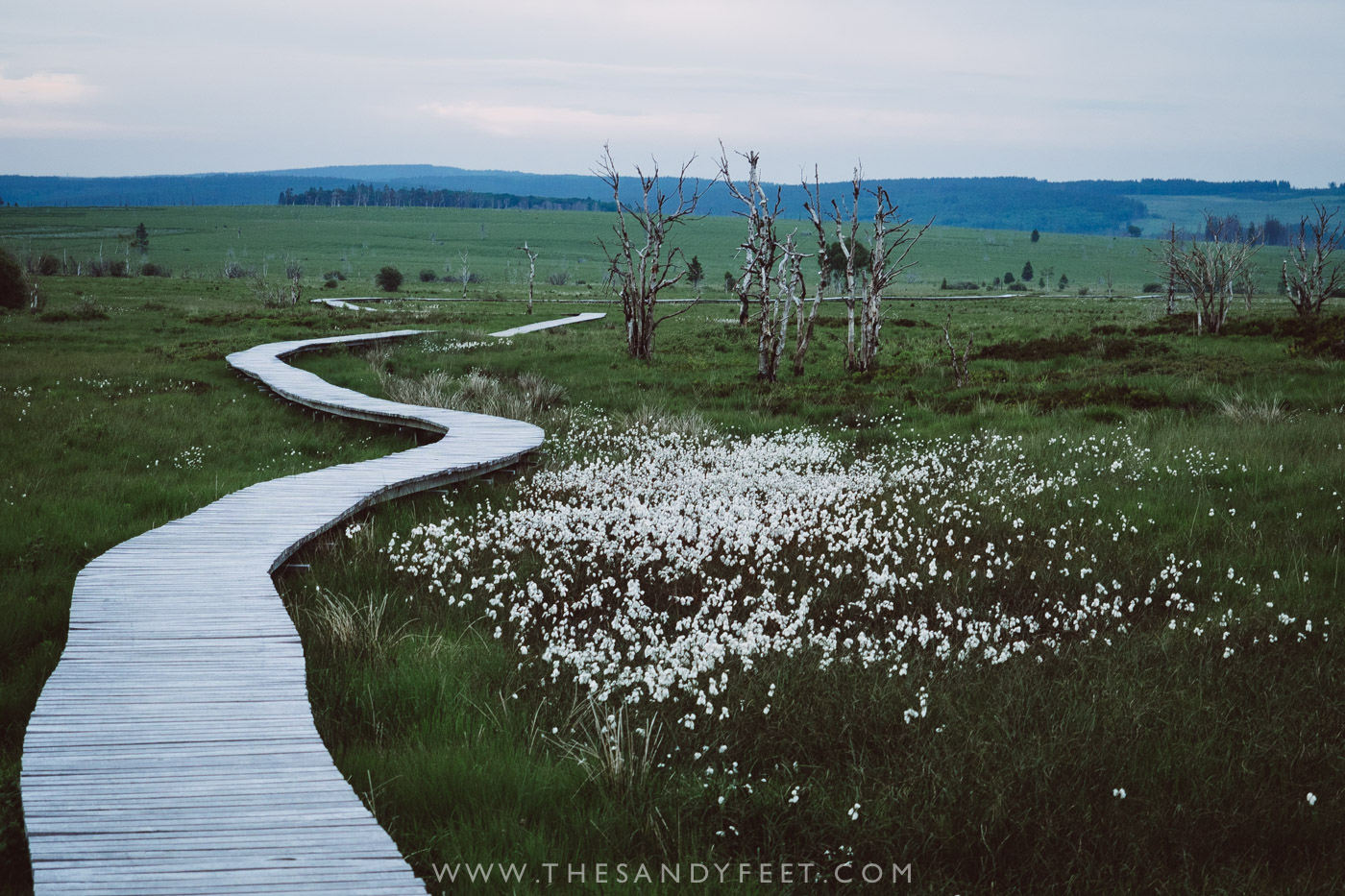 Hiking in the High Fens | Top Things To Do In Belgium's Wallonia Region