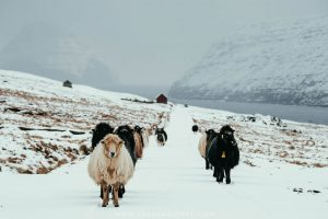 Suduroy, Faroe Islands | A Short Guide To The Faroes Southernmost Isle