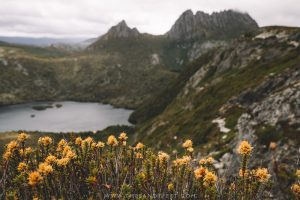 Marion's Lookout. Cradle Mountain Walks. Cradle Mountain Hikes. Cradle Mountain National Park. Tasmania. Australia